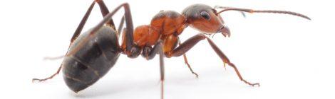 Detailní fotografie mravence