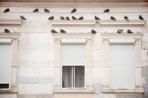 Holubi na fasádě domu