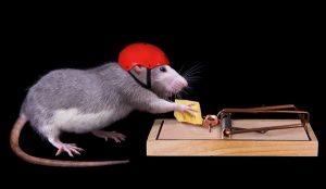 potkan a past na potkany